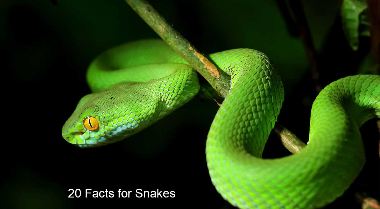20 Amazing Facts of Snakes