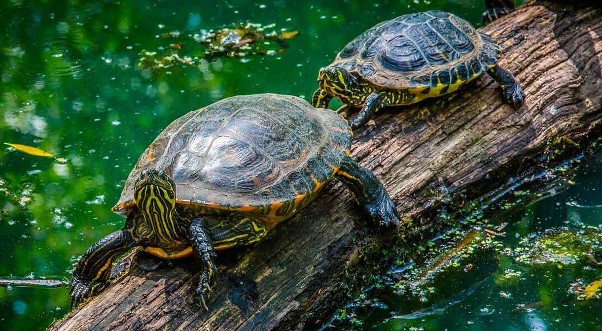 15 Amazing Facts of Turtles